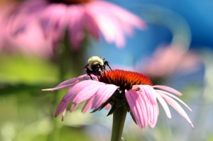 Bee on Flower (small)