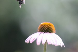 In focus Bee Legs (small)