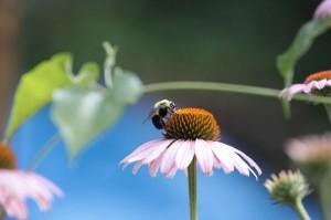 Nice profile bee on flower (small)
